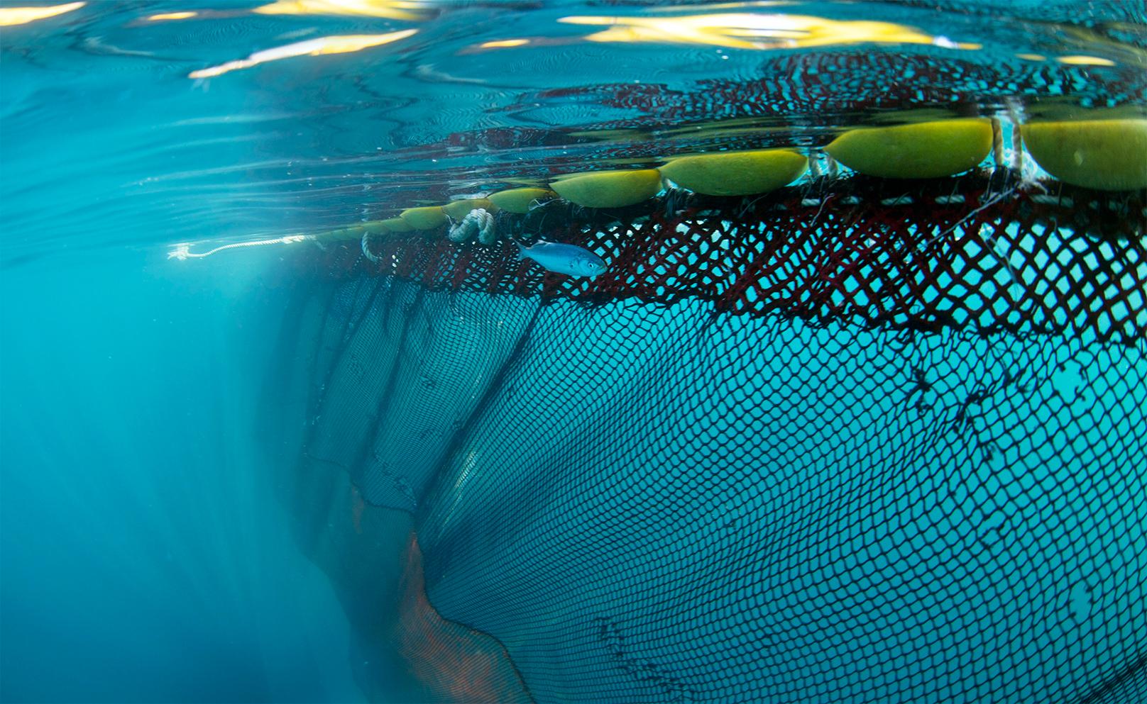 Pesca oggi - Rete da pesca per decorazioni ...