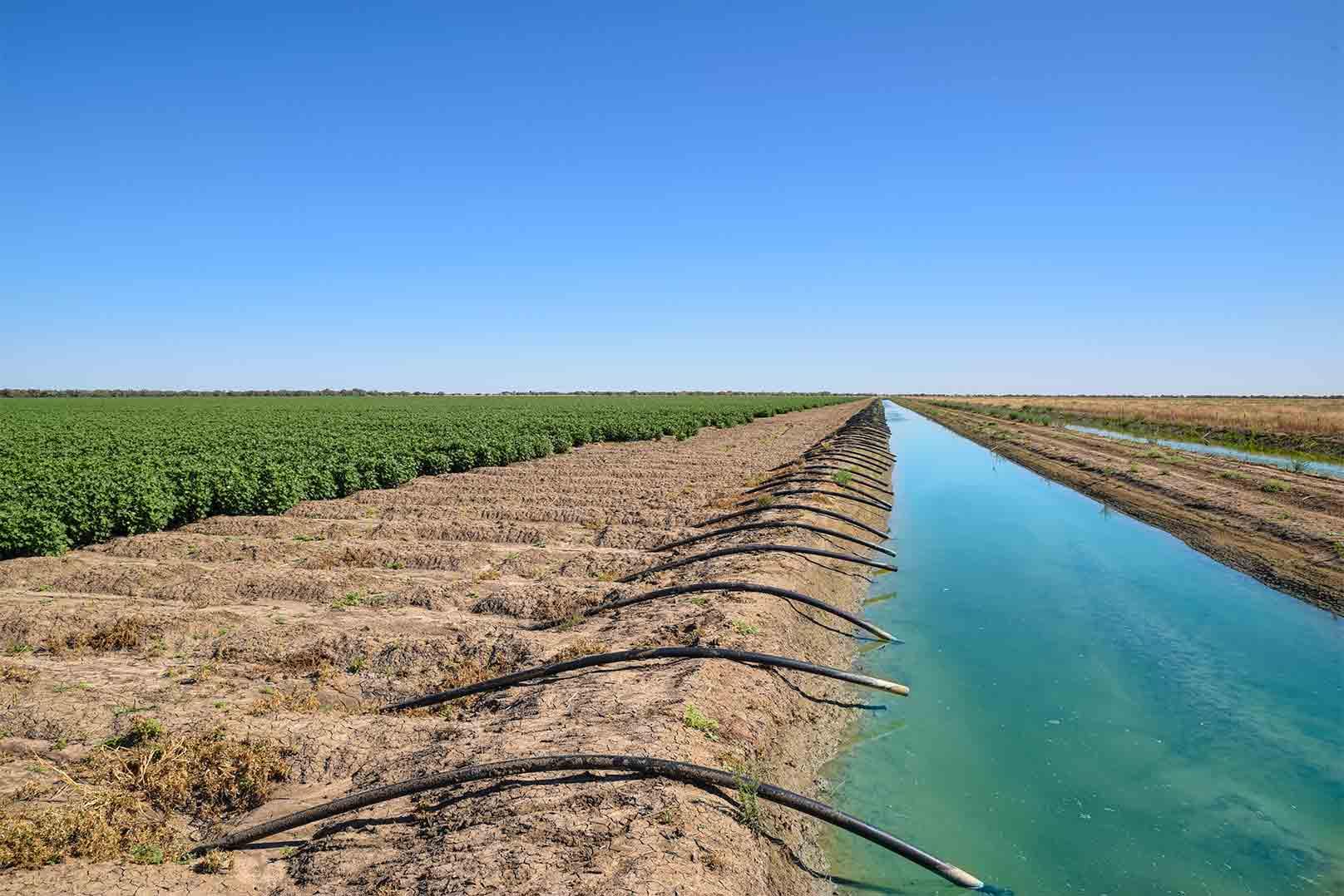 Impatti ambientali for Irrigazione per sommersione